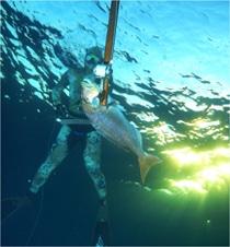 Teak Sea – Après le tir