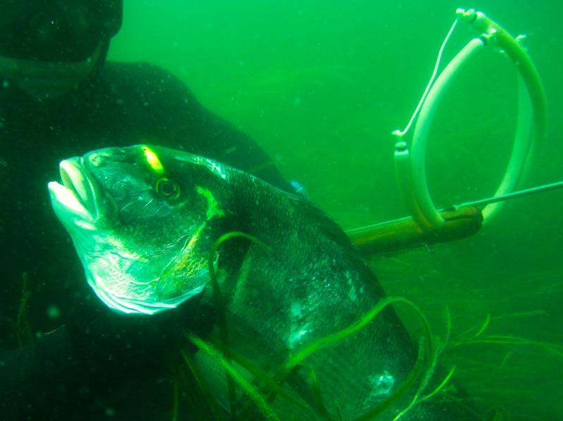 X - L'arme secrète des eaux vives